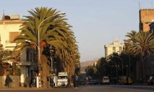 A general view shows palm trees along the main street of Eritrea's capital Asmara, February 20, 2016.  REUTERS/Thomas Mukoya