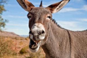 laughing_donkey